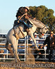 rodeo2011_10049