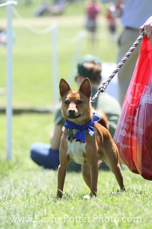 Dog in a Bandana on a Leash