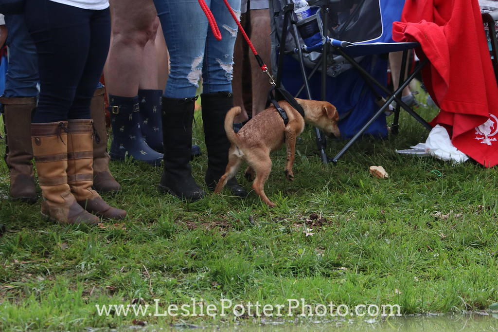 Dogs at the Rolex Kentucky Three-Day Event