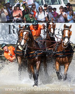 IJsbrand Chardon of the Netherlands at the 2010 Alltech FEI World Equestrian Games