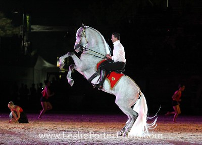 Andalusian and dancers at the Opening Ceremonies of the 2010 Alltech FEI World Equestrian Games.