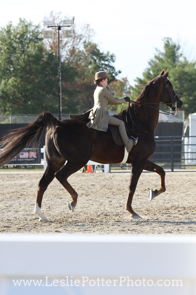 American Saddlebred Breed Demo at the 2010 Alltech FEI World Equestrian Games