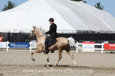 Rocky Mountain Horse Breed Demo at the 2010 Alltech FEI World Equestrian Games