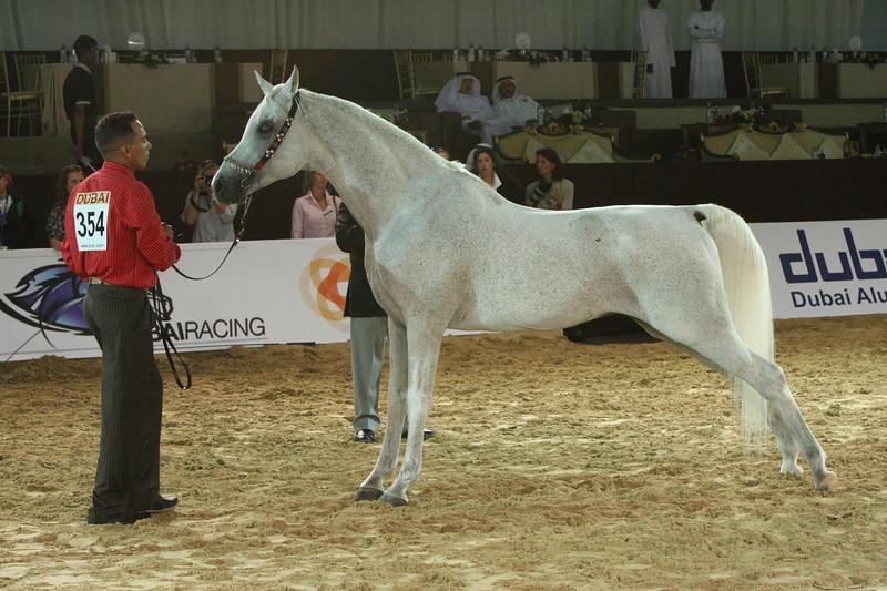 41. SM Matra, Endurance Champ, Stallions