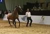 55. Darike, Racing Stallions