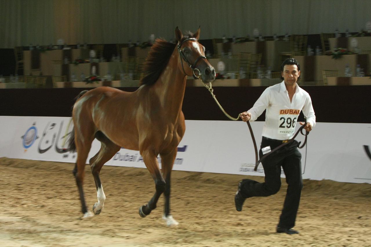 11. La Tarmes, 1st, Racing Mares