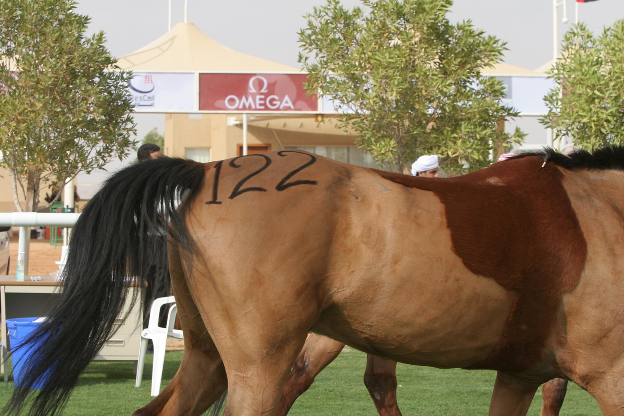 Oritos Sonny, owned and ridden by Becky Spencer (USA)