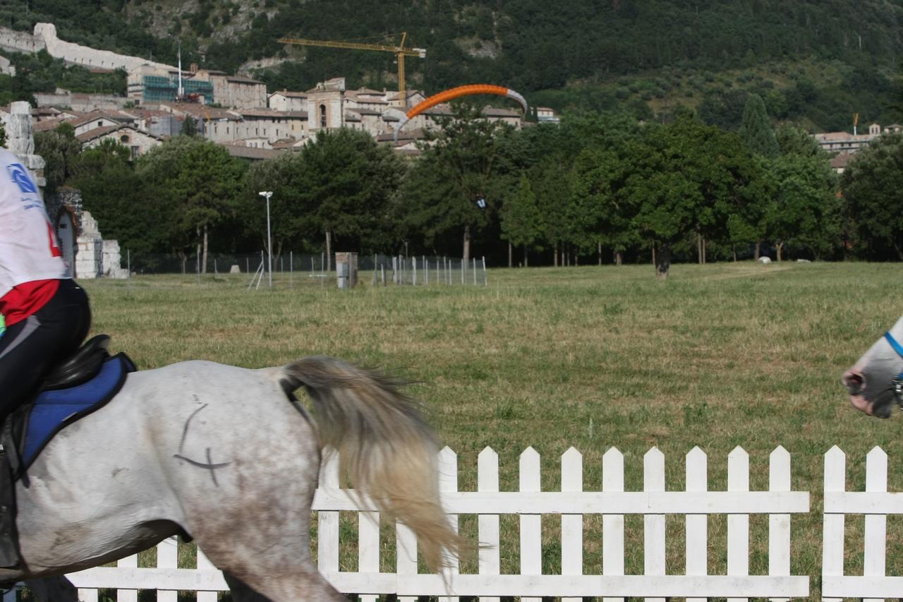 24.  Skydivers land near horses