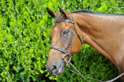 Sean Equestrian