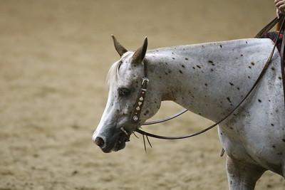 Pony Pleasure-3708