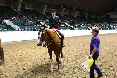 2212 APHA Youth Hunter Under Saddle-1348