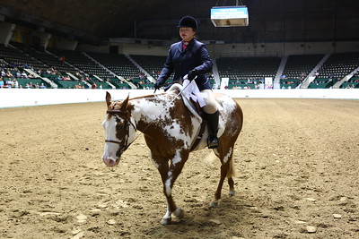 2212 APHA Youth Hunter Under Saddle-1356