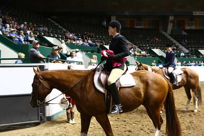 2212 APHA Youth Hunter Under Saddle-1349