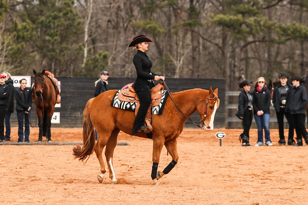 Georgia's Bailey Anderson rides Tuffy during the Bulldogs' competition with South Carolina at the UGA Equestrian Complex in Bishop, Ga., on Friday, February 3, 2017.  (Photo by Cory A. Cole / Georgia Sports Communication)