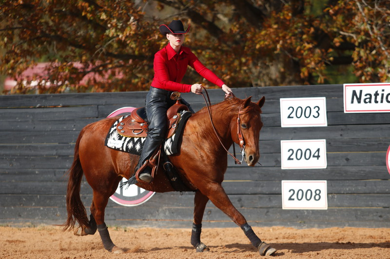 The No. 1 Georgia equestrian team competes against No. 8 South Carolina at the UGA Equestrian Complex in Bishop, GA on Friday, Nov. 3, 2017 (Photo by Steffenie Burns / Georgia Sports Communication)