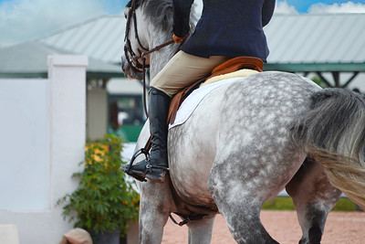 Grey horse with rider galloping towards a jump in a competive equestrian event