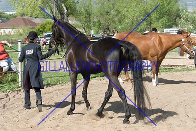 HorseShow-2563-34