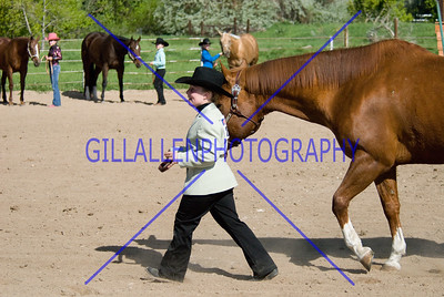 HorseShow-2558-29