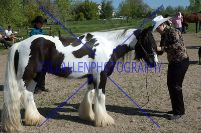HorseShow-1520-5