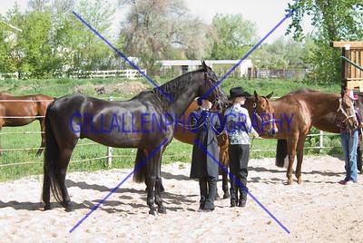 HorseShow-2555-26