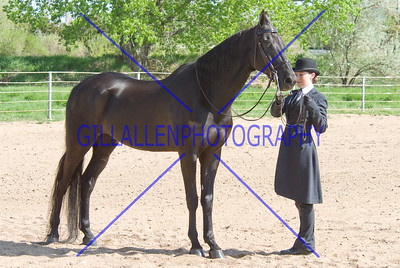 HorseShow-2561-32