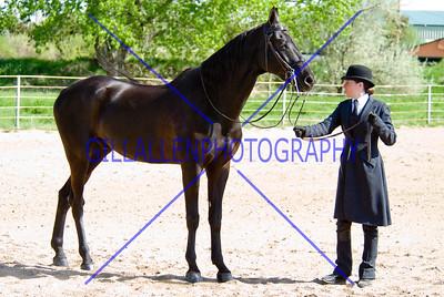HorseShow-2560-31