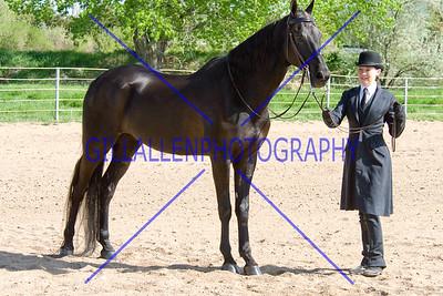 HorseShow-2562-33