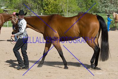 HorseShow-2568-39