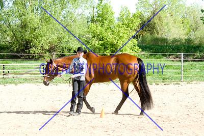 HorseShow-2564-35