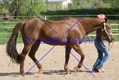 HorseShow-2570-41
