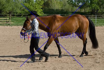 HorseShow-2567-38