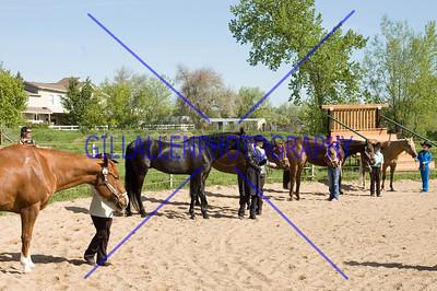 HorseShow-1540-25
