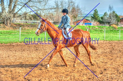 Colorado Pinto Horse Association