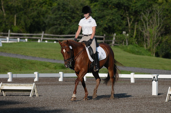 BCHP 8-12-2012 HT Dressage - Ring 1