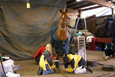 Is this a NASCAR pit stop or a Pony Club session?  Memo is a good sport being the training subject for the wraps and bandaging session for Pony Club.