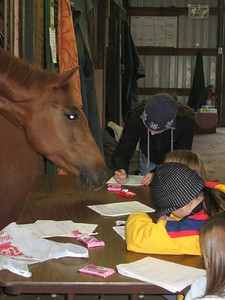 GGem helps the girls study at a Mock Quiz Rally session at Windsong.  The girls are preparing for the 2008 Pony Club Quiz Rally.