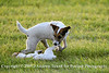 """Snapshot gallery of my favortie images (shot by Andy Towell for Poulsen Photography) from the 2007 Event at Rebecca Farm. Image Copyright © 2007 J. Andrew Towell for Poulsen Photography. Image use here courtesy of Poulsen Photography. All Rights Reserved. Please contact the copyright holder at <a href=""""http://www.poulsenphoto.com"""">http://www.poulsenphoto.com</a> to discuss any and all usage rights and to see and purchase images from the event."""