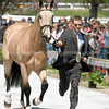 Images of Jonathan Holling on Dun to A T from the 2008 Rolex Three-Day Event at the Kentucky Horse Park in Lexington Kentucky. From Troutstreaming Outdoor and Sports Media's on location coverage. All content Copyright 2008 J Andrew  Towell Troutstreaming.