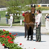 Images of Dornin Anne North on Lion Display from the 2008 Rolex Three-Day Event at the Kentucky Horse Park in Lexington Kentucky. From Troutstreaming Outdoor and Sports Media's on location coverage. All content Copyright 2008 J Andrew  Towell Troutstreaming.