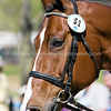 Images of Emilee Libby on Cahir from the 2008 Rolex Three-Day Event at the Kentucky Horse Park in Lexington Kentucky. From Troutstreaming Outdoor and Sports Media's on location coverage. All content Copyright 2008 J Andrew  Towell Troutstreaming.