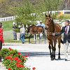 Images of Stephen S. Bradley on From from the 2008 Rolex Three-Day Event at the Kentucky Horse Park in Lexington Kentucky. From Troutstreaming Outdoor and Sports Media's on location coverage. All content Copyright 2008 J Andrew  Towell Troutstreaming.