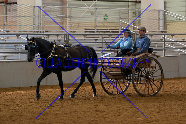 2013 Continental Divide Horse Show