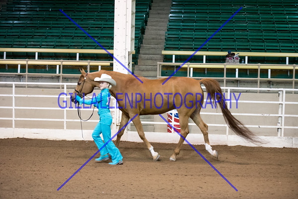 2015 Colorado Fall Charity Horse Show