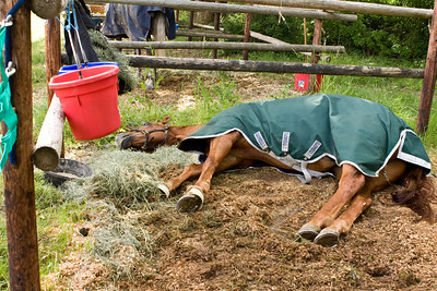 Georgio finds an intersting way to access the grass outside his stall.
