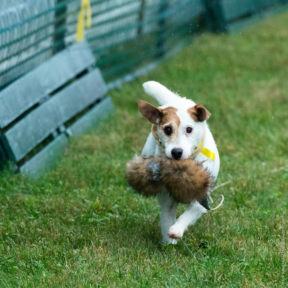 MontpelierHuntRaces-Terriers-2