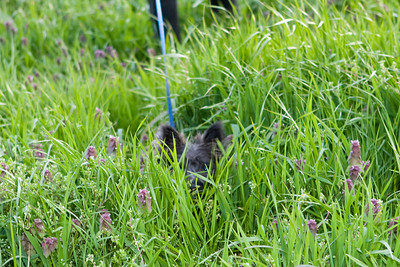 Tall grass and short dogs.