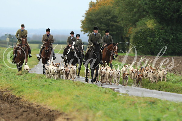 The South Wold Hunt pack on early morning autumn hunting.