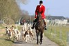 South Wold Hunt foxhounds.