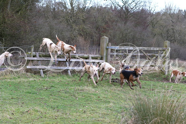 South Wold Hunt