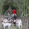 South Wold huntsman and hounds